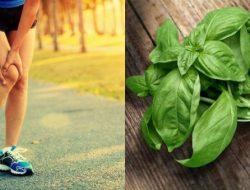 6 Manfaat Daun Kemangi untuk Kesehatan Tubuh, Apa Saja?